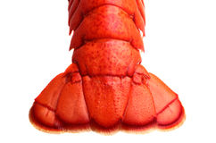 Lobster tail. On white background Stock Photos