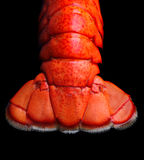 Lobster tail Stock Images