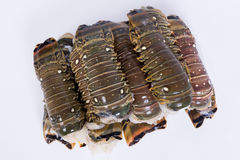 Lobster tail stock photography