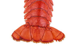 Lobster tail Royalty Free Stock Photos