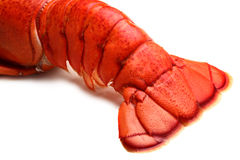 Lobster tail. On white background Royalty Free Stock Photos
