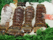 Lobster tails Stock Photos