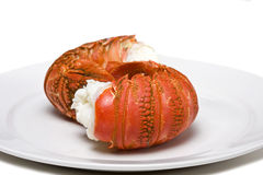 Free Lobster Tails Royalty Free Stock Photography - 4313327