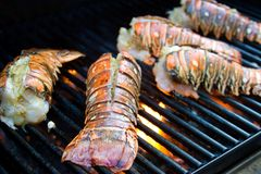 Lobster tails Royalty Free Stock Photos