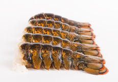 Lobster tails Stock Photography