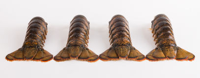 Lobster tails Royalty Free Stock Photography