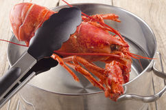 Lobster is taken from a pot Royalty Free Stock Image