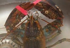 Lobster tank Royalty Free Stock Photo