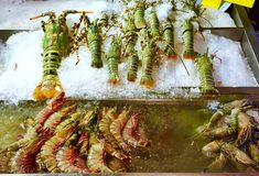 Lobster and tiger prawns Stock Images