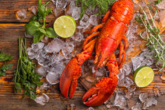 Lobster. Top view of whole red lobster on ice stock photo