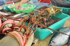 Lobster in Traditional Fish Market Stock Image