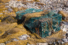 Lobster Trap in Seaweed Stock Image