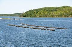 Lobster Traps - Prince Edward Island - Canada Stock Image