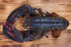 Lobster. From USA. on background Stock Images