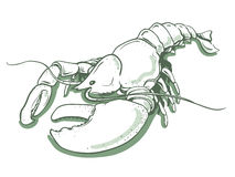 Lobster. Vector hand drawn illustration of lobster Stock Photo