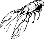 Lobster. Vector illustration Royalty Free Stock Image