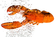 The lobster in water Stock Photo