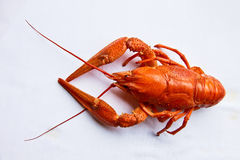 Lobster on white Stock Image