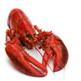 Lobster on white. Simple composition of a lobster on white - shallow dof royalty free stock photography