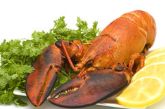 Lobster on white background Stock Image
