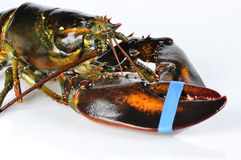 Lobster on white royalty free stock photo