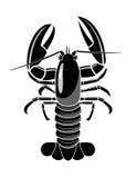 Lobster. Stock Photos