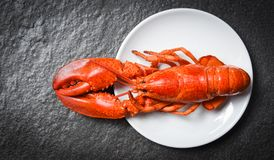 Lobster on white plate with dark background - seafood shrimp prawn royalty free stock photography