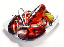 Lobster on a white plate Royalty Free Stock Photography