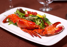 Free Lobster With Salad And Tomato Royalty Free Stock Photos - 17711728