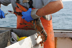 Lobsterman Stock Photos