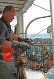 Lobsterman on boat with trap Perkins Cove Maine. Lobster man lowering trap overboard Royalty Free Stock Photo