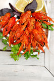 Lobsters. On a plate with parsley, basil and lemon Stock Photography