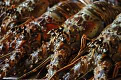 Lobsters. From the Bounty island in Dominican Republic stock photos
