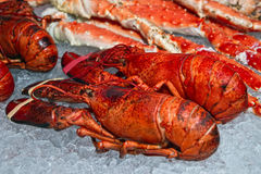 The lobsters. On ice, Fish market. Bergen. Norway Royalty Free Stock Photo