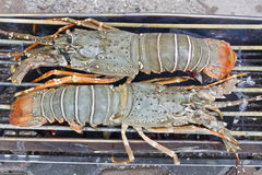 Lobsters. On grill close up Stock Photography