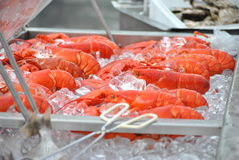Lobsters Stock Images