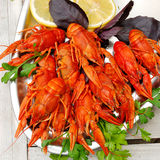 Lobsters. On a plate with parsley, basil and lemon Royalty Free Stock Photo