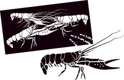 Lobsters. Vector image shows a lobster alone and in the group Stock Images