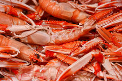 Lobsters. The box of seafood, lobsters Royalty Free Stock Photo