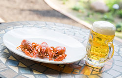Lobsters with beer. Lobsters with a glass of beer Royalty Free Stock Image