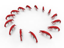 Lobsters - circular array Stock Image