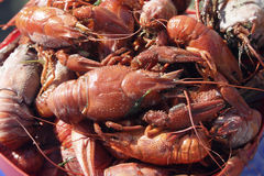 Lobsters and crayfish Stock Image