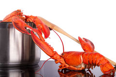 Lobsters escape Royalty Free Stock Photography