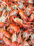 Lobsters In Fish Market. Lobsters For Sale In Fish Market Royalty Free Stock Photo