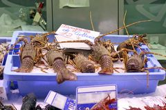Lobsters in a fish shop. Close up view of some lobsters in a fish shop royalty free stock photo