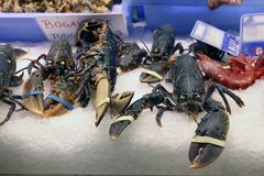 Lobsters in a fish shop. Close up view of some lobsters in a fish shop stock images