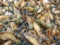 Lobsters at food market Royalty Free Stock Photos