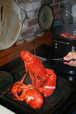 Lobsters fresh from the pot Royalty Free Stock Image
