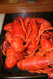 Lobsters fresh from the pot Royalty Free Stock Photography