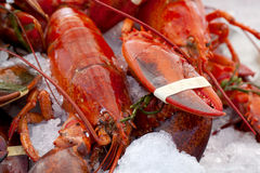 Lobsters on Ice Royalty Free Stock Images